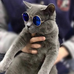 Advantage Gatos hasta 4kg - Pipeta