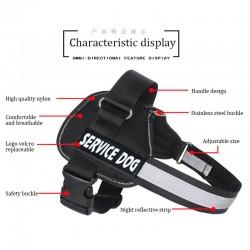 Nexgard antiparasitario Externo Perros - 2 a 4 Kilos - 1 comprimido