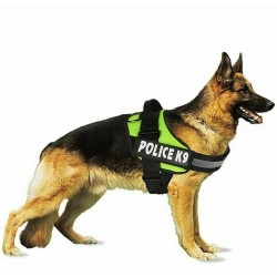 Dentalife Gatos 40g