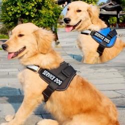Spike's Dinner 600 grs - Alimento erizo